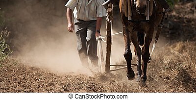 Farmer and horse plowing farmer field, guided by an elderly ...