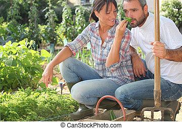 Farmer and wife gardening