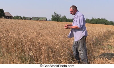 farmer check wheat plant