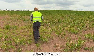 Farmer checking cornfield