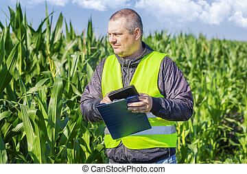 Farmer checking the corn field