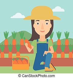 Farmer collecting carrots. - A woman collecting carrots in...