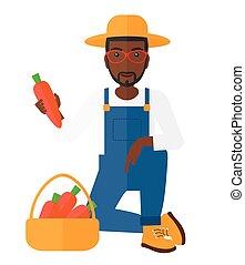 Farmer collecting carrots. - An african-american farmer...