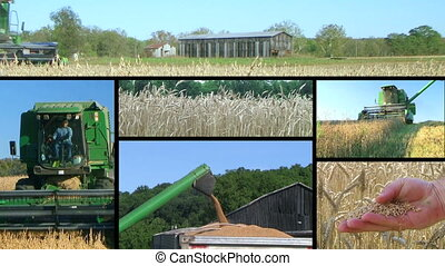 Farmer Combining Crops Composite