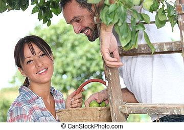 Farmer couple picking fruit