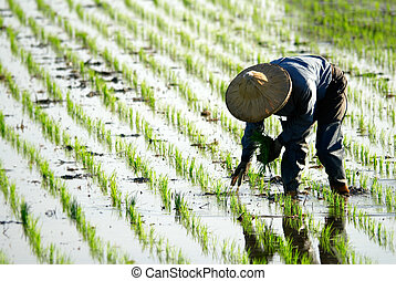 farmer, dolgozó, alatt, a, tanya