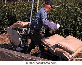 farmer, dolgozó