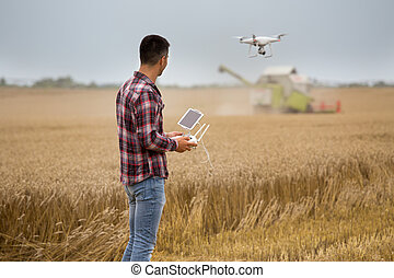 Farmer driving drone above wheat field during harvest