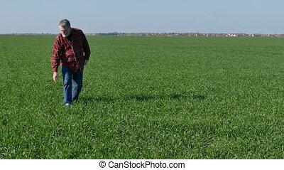 Farmer examine wheat field