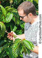 Farmer examining a coffee