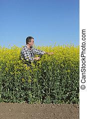 Farmer examining blossoming rapeseed field