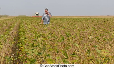 Farmer examining soybean field - Adult farmer examining...