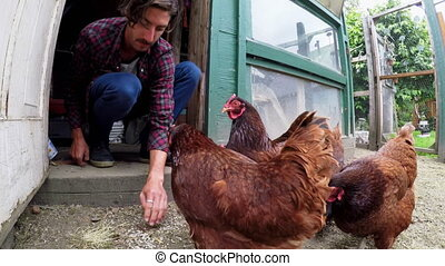 Farmer feeding hen in the hen house 4k - Male farmer feeding...