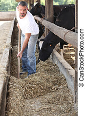 Farmer feeding the cows