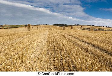 Farmer field,Yorkshire, stacked straw balesc