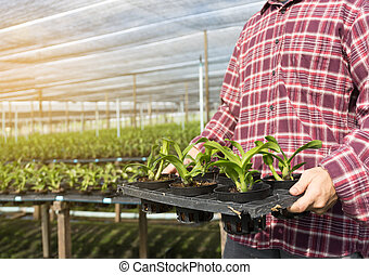 Farmer fresh vegetables, agriculture food production concept agricultural growing activity