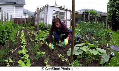 Farmer gardening in backyard 4k - Young farmer gardening in...