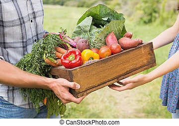 Farmer giving box of veg to customer on a sunny day