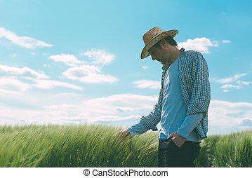 farmer, gyalogló, át, egy, zöld búza, mező
