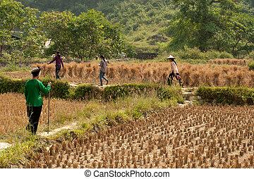 farmer, gyalogló, alatt, egy, field.