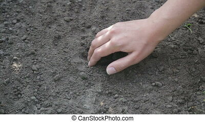 Farmer hand seeding peanut close up