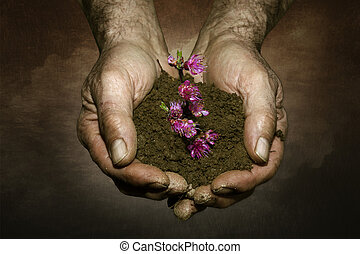 farmer hands holding branch with flower background