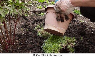Farmer planting nature seedling in garden