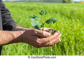 Farmer hands with plant