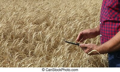 farmer hands with tablet in a wheat field - Close up farmer ...