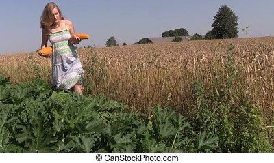 farmer harvest courgette