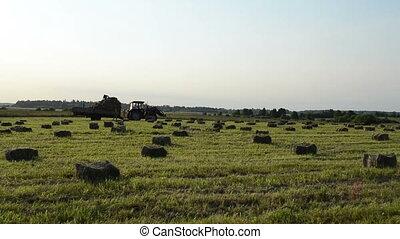 farmer harvest hay bale