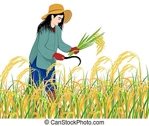 farmer harvest rice on white background vector design