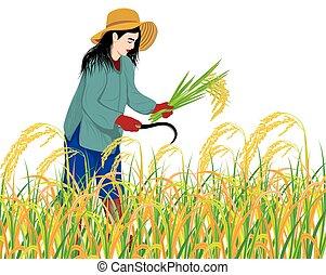 farmer harvest rice on white background vector design