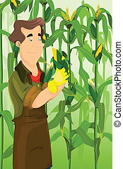Farmer harvesting corns - A vector illustration of happy...