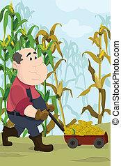 A vector illustration of happy farmer harvesting corns in a field