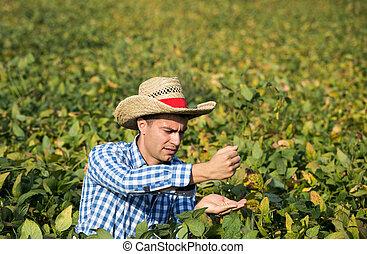Farmer holding soybean in hands