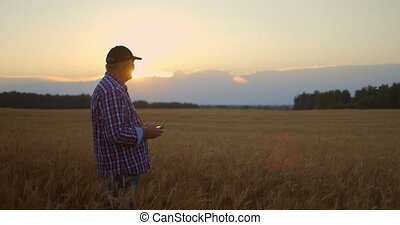 Farmer holds remote controller with his hands while quadcopter is flying on background. Drone hovers behind the agronomist in wheat field. Agricultural new technologies and innovations. High quality 4k footage