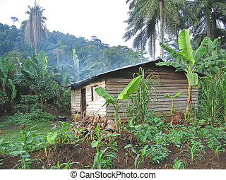 Farmer house in the tropical jungle - Cameroon - Africa.