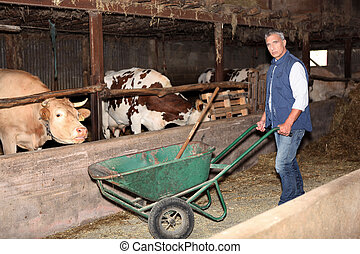 Farmer in a cattle shed