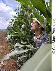 farmer in a corn field