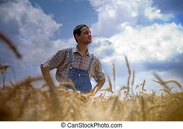 farmer in a wheat field