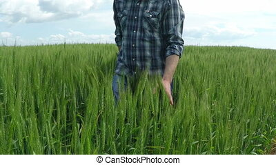 Farmer in a Wheat Field