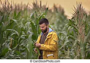 Farmer in corn field