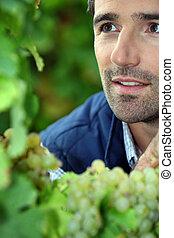 farmer in his vineyard