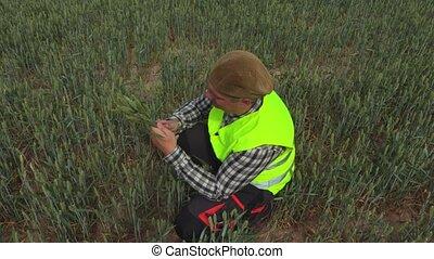 Farmer in middle of rye field