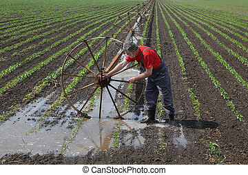 Farmer in paprika field with watering system