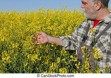 Farmer in rapeseed field