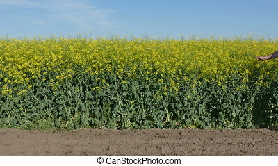 Farmer in rapeseed field