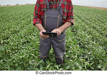 Farmer in soy field inspecting crop