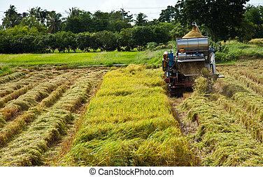 farmer in Thailand